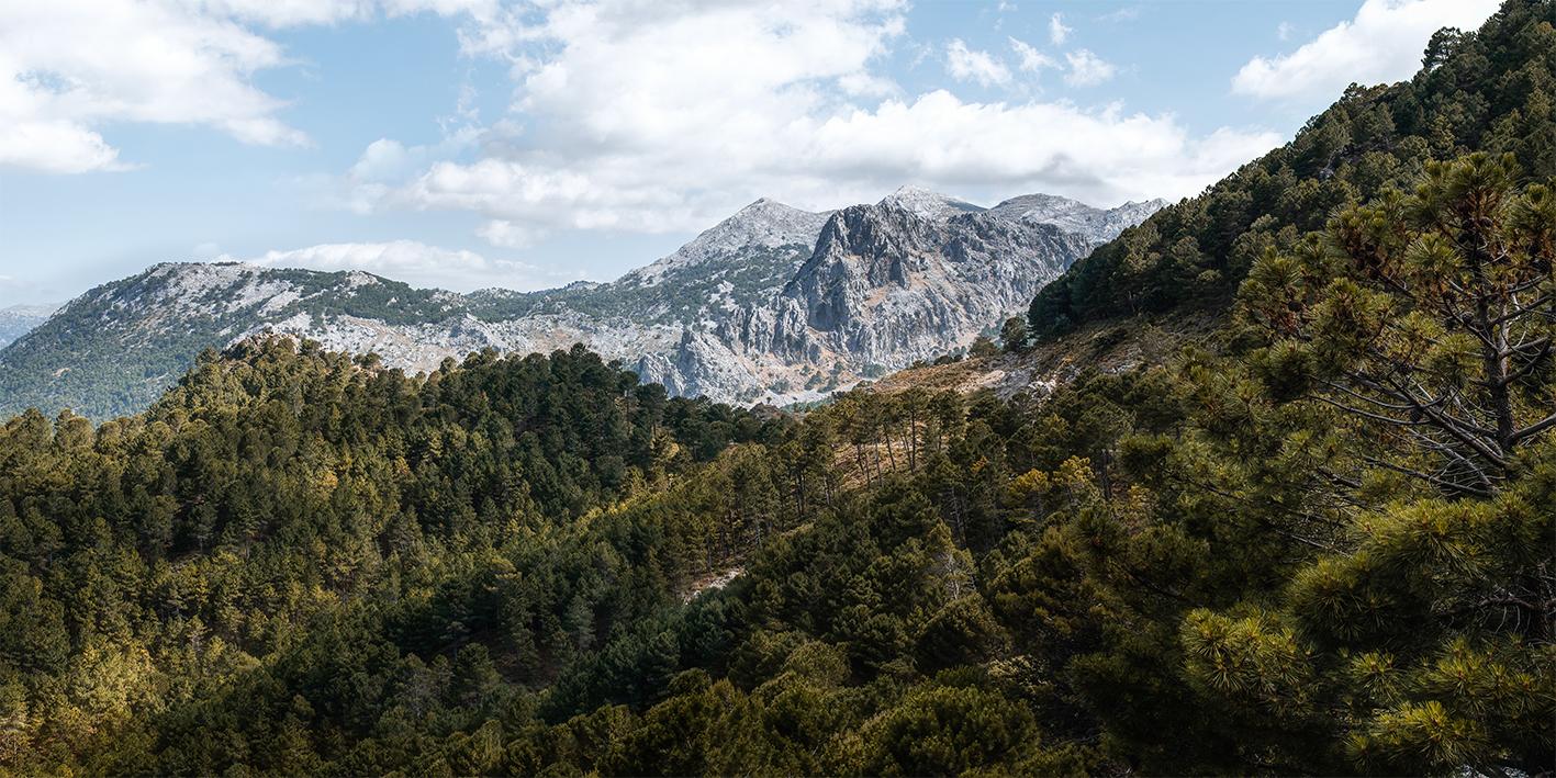 Leinwandbild - Andalusische Wälder mit Bergen