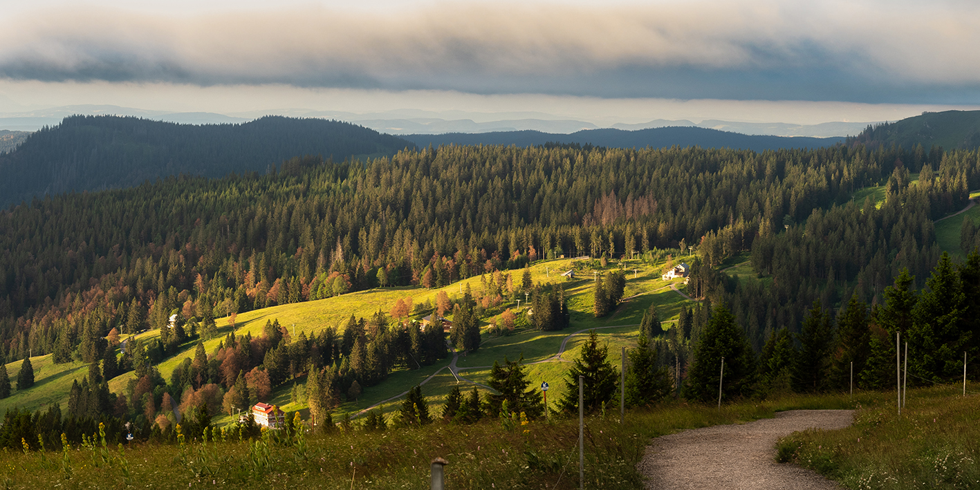 Leinwandbild - Goldener Schwarzwald bei Sonnenaufgang