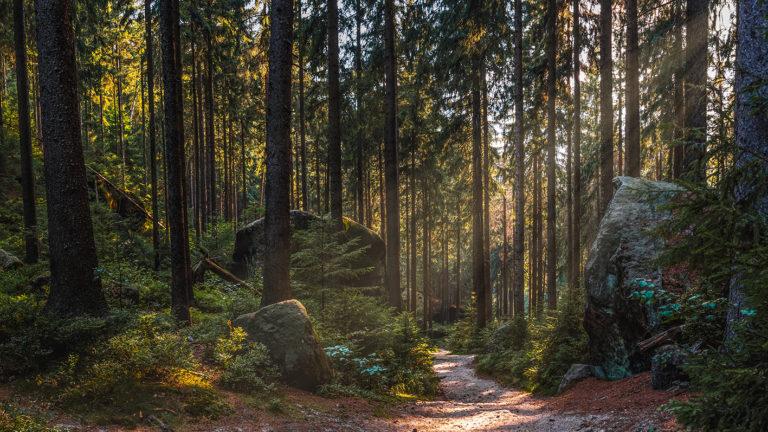 Leinwandbild - Waldlichter im Elbsandsteingebirge