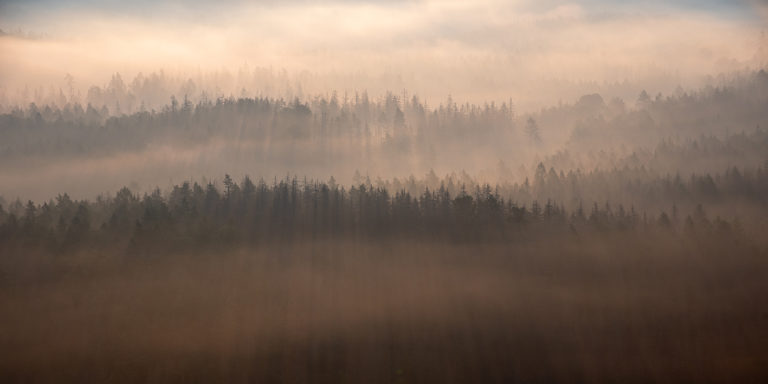 Leinwandbild - Baumsilhouetten im Nebelwald
