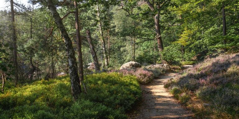 Leinwandbild - Waldlichter am Morgen